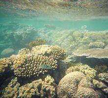 The Great Barrier Reef by Kymbo