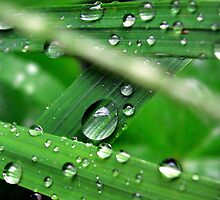 Green Grass Drops by Charlotte Harold