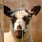Inquisitive Lamb by ChrisHarvey67