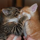 Kissing Kittens by Amy Boddie