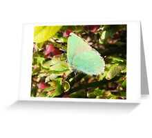 Emerald Delight Greeting Card
