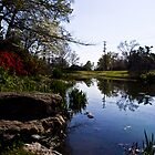 Woodward Pond by FranSanstead