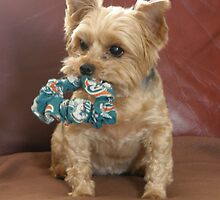 Miami Dolphins Fan by Judith Hayes
