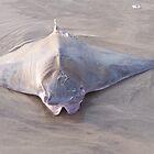 Sea Creature by Liamsmom