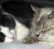 Kitty Cuddling by kimbarose