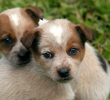 Poster Pups by Steve Malcomson