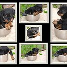 Pot Rottie Collage by taiche