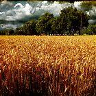 Before the Harvest by Toni Verdú Carbó