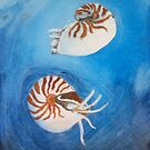 Pearly Nautilus Shells by JamieLA