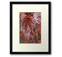 Frosted Maple Leaf Framed Print