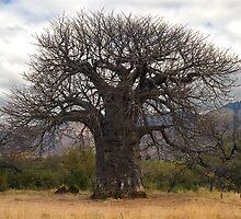 Baobab by Vickie Burt