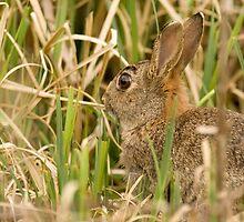 Hiding Rabbit by George Stylianou
