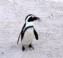 Safari - Penguin by rabeeker