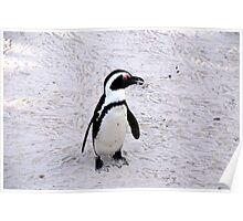 Safari - Penguin Poster