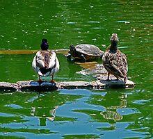 ...let no duck tear apart by Lenny La Rue, IPA