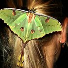 LUNAR/MOON MOTH Argema mimosae by Magaret Meintjes
