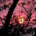 Cutting the Sunset by LNara