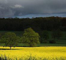 Rape field set against an angry sky by Paul  Brewer