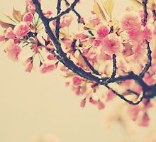 Spring Blossoms by Kristybee