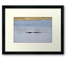 Gator Blues Framed Print