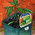 Jalapeno Seedling by bernzweig