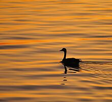 sunset goose silhouette by genielamb