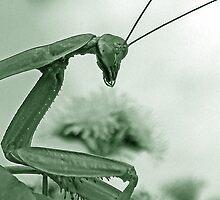 mantis attacks by eprather95