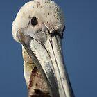 Birds of SW Florida 2010 by Virginia N. Fred