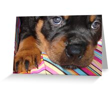 Rottweiler - Baby Face Greeting Card