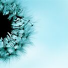 dandelion blue by AnaBanana