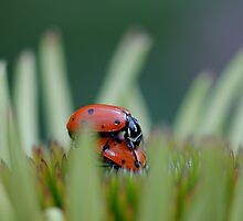 (ladybugs in love) please do not disturb by Ruby  Pen