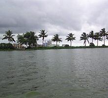 Windswept trees along the edge of a lake in Kolkata, India by ashishagarwal74