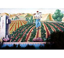 Stawberry Picking Photographic Print