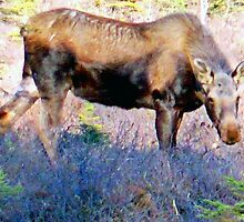 May Day Moose by copperhead