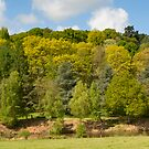 Winkworth Arboretum 2 by bubblebat