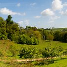 Winkworth Arboretum 3 by bubblebat