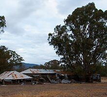 The old Shearing Shed by rflower