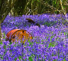 Bluebell carpet by SWEEPER