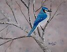 Winter Jay ~ oil painting by Barbara Applegate