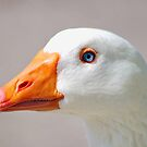 goose up close  by relayer51