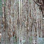 Flooded Eucalypt Woodland by Gadam