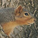 Profile of a Squirrel by lorilee