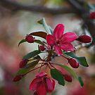 Bloomin' Pink by Kathy Nairn