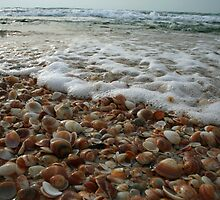 Seashells by Amichai Gross