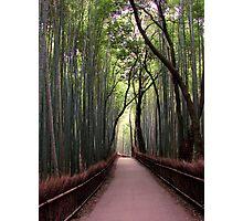 Bamboo Breathtaking Photographic Print