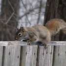 do you have any food? by Cheryl Dunning