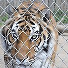 Sorates by Jarede Schmetterer