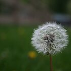 Make a Wish by Bella  Cirovic