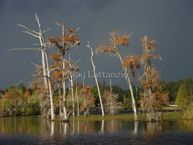 Lull Before the Storm by May Lattanzio