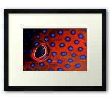 Coral Trout Eye Framed Print